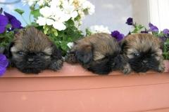CachorritosdeGoiz-Ametz